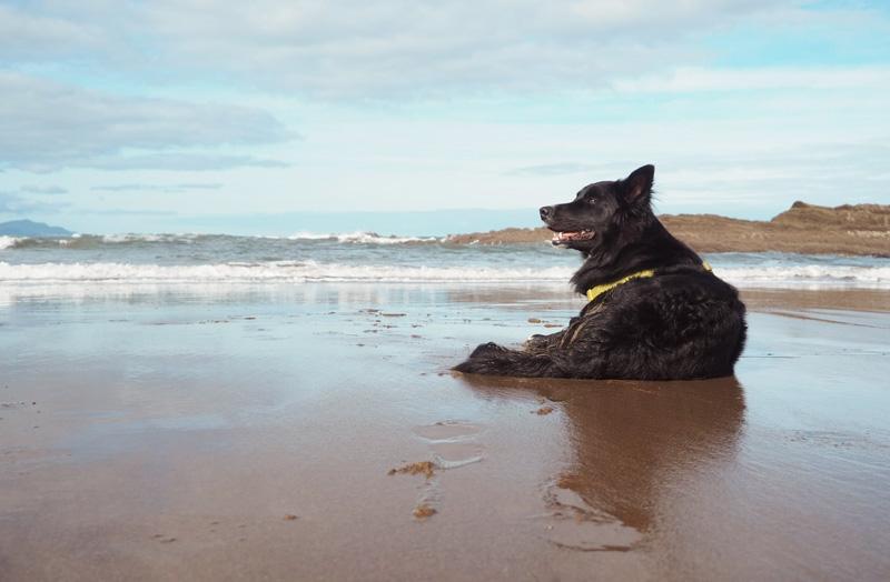 consejos para ir a la playa con perros