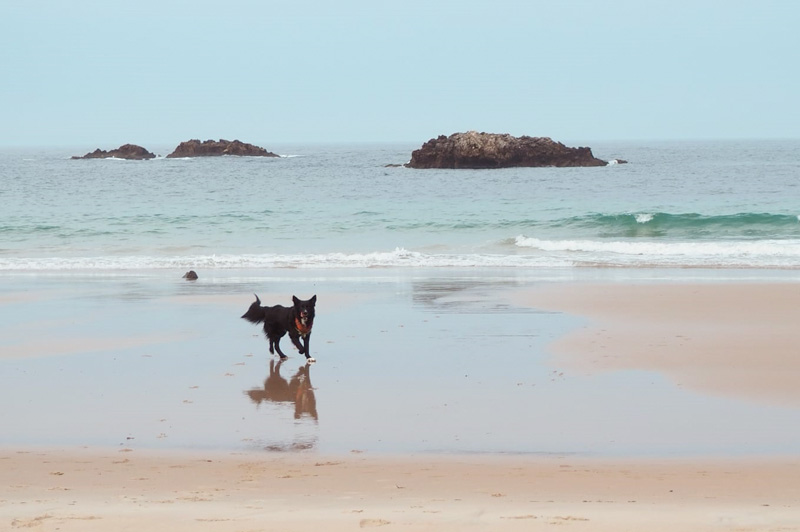 paseo con perro por la costa