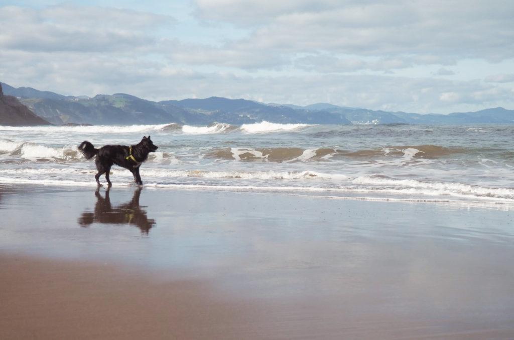 ir a la playa con perros