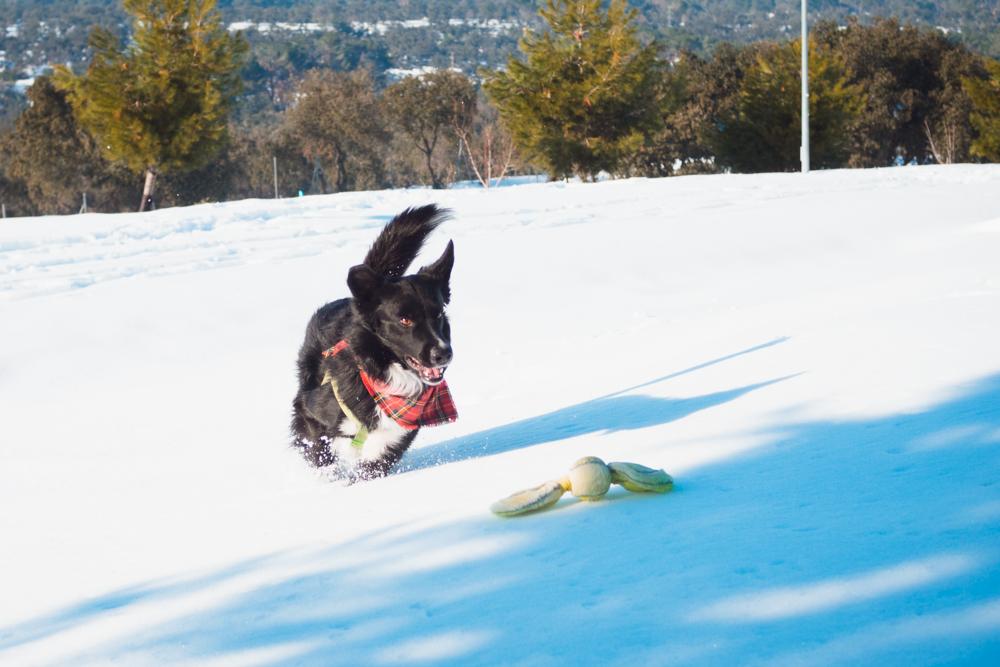 diversión con perros en la nieve