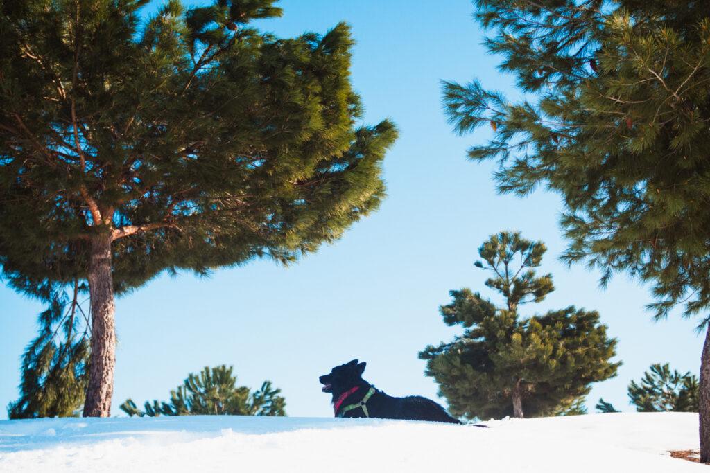 consejos para disfrutar de la nieve con perro