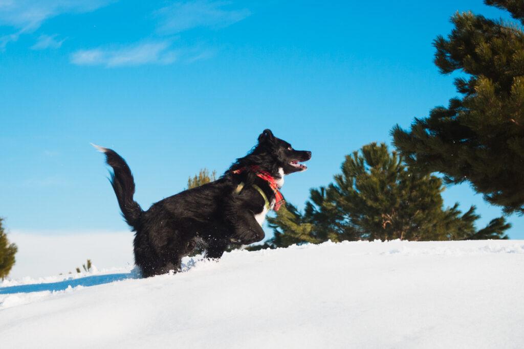 senderismo en la nieve con mascota