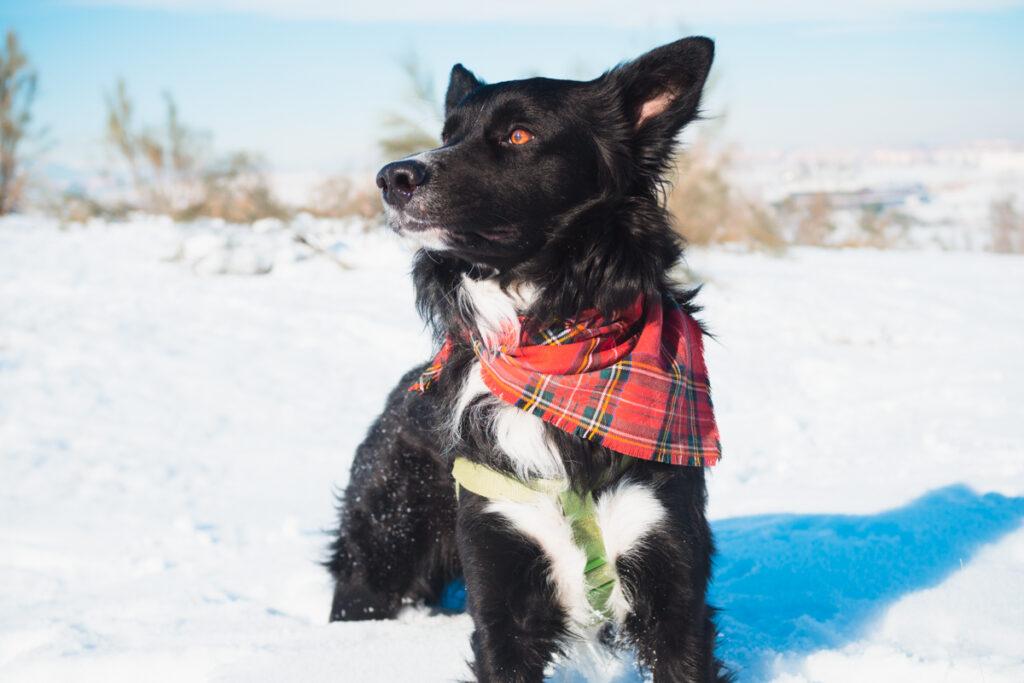 ir a la nieve con perro
