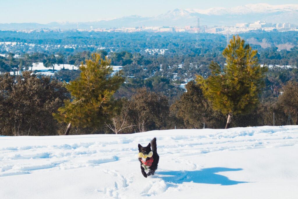 disfrutar de la nieve con perro