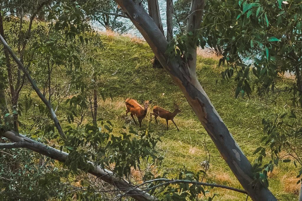 Naturaleza en Granadilla