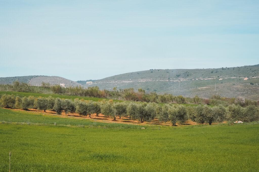 Cultivos en Torremocha del Jarama