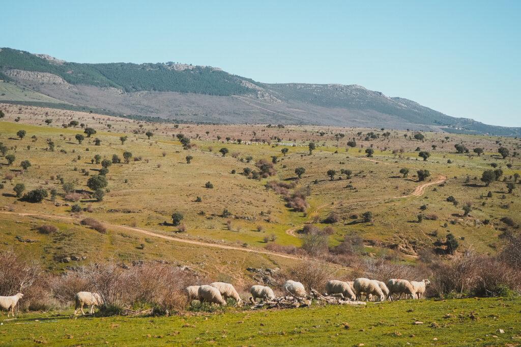 Camino de los Descansaderos en Paredes de Buitrago